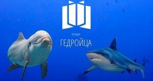 Осторожно: жестокое видео! Акулы и дельфины на премии Гедройца